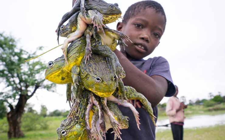 Bullfrog - dangerous foods